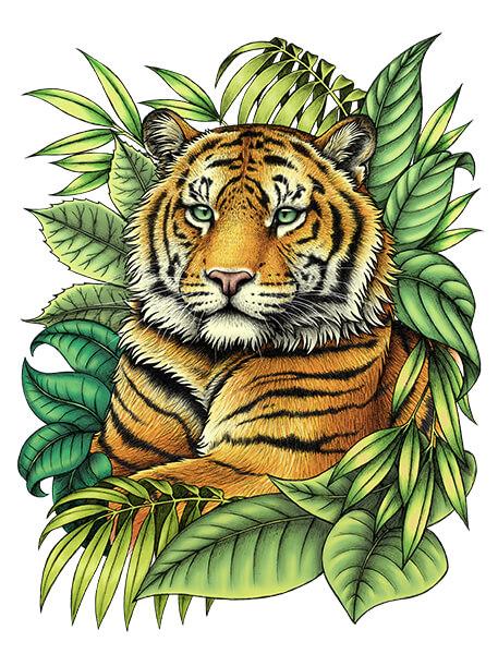 Tiger Colours small - تصویر سازی