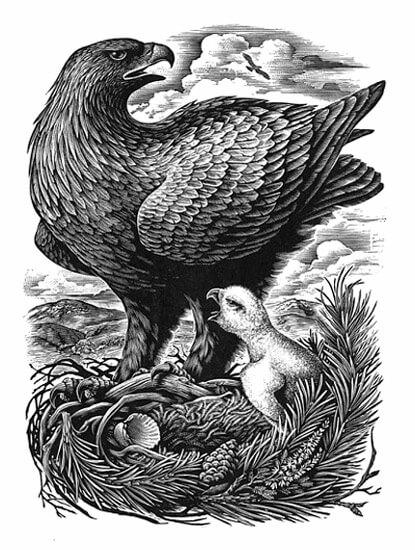 eagle - تصویر سازی